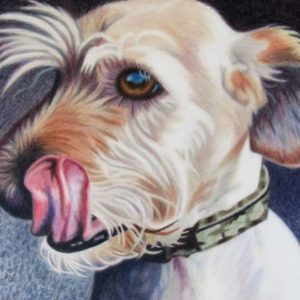 MAX the labradoodle coloured pencil finished 29x30 cm_800x600
